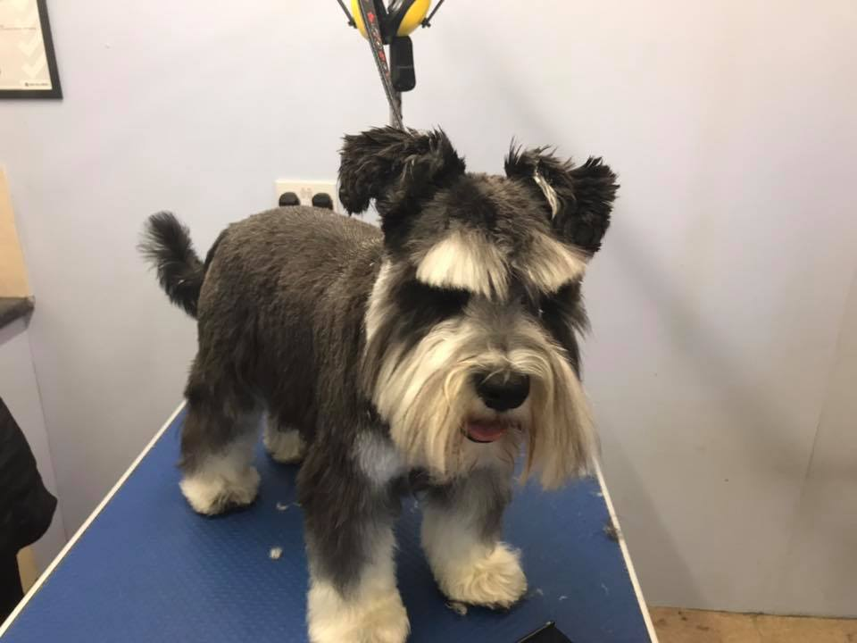 dog groomers in dunstable